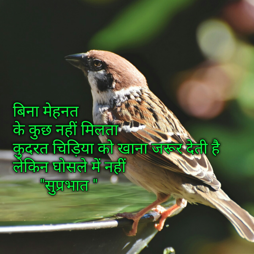 Suprabhat Images with Hindi Quotes