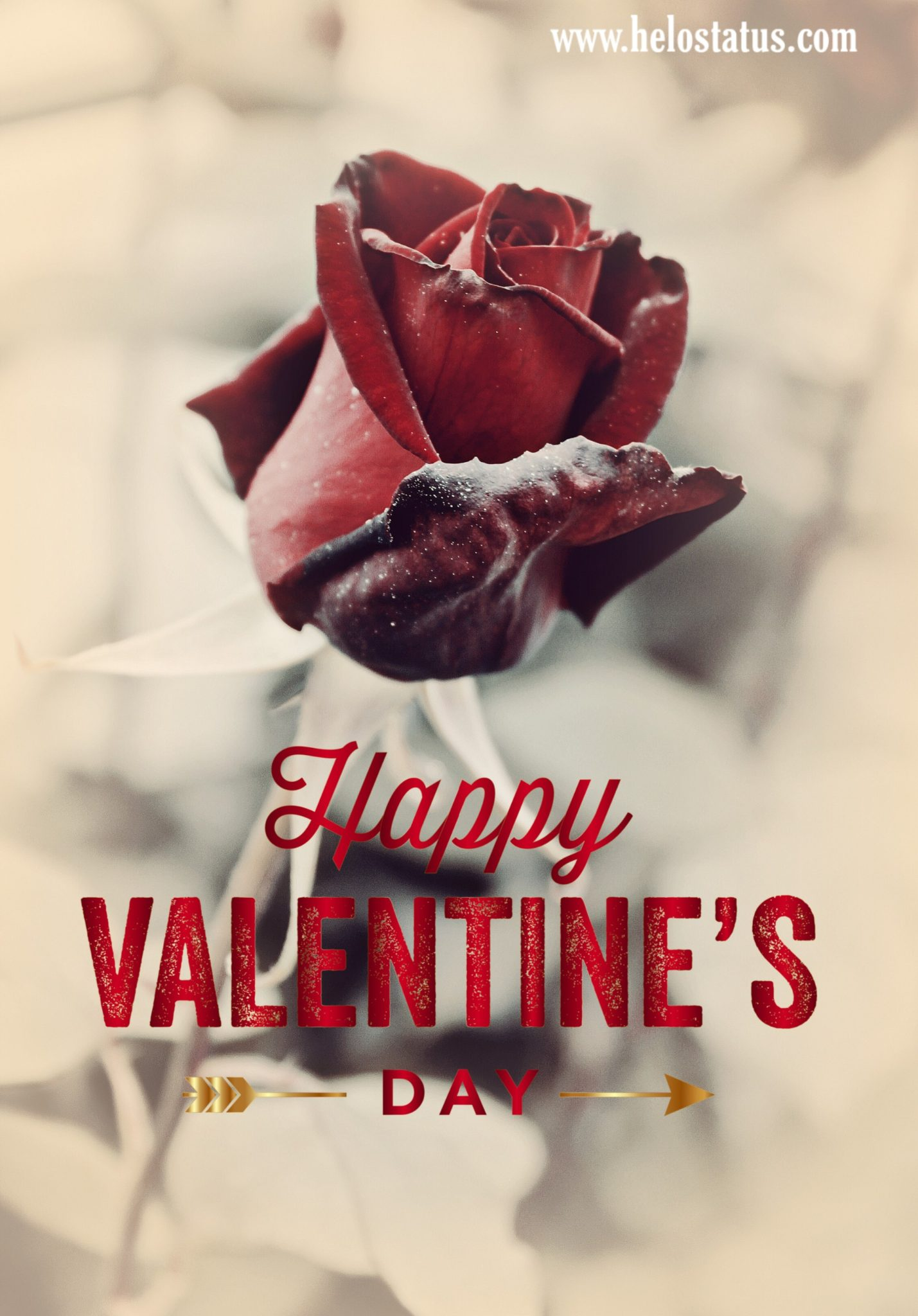 14 February Happy Valentine day images